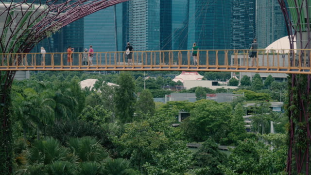 singapore - november 7,2018: tourists walk along the ocbc skyway at the supertree grove - bay of water stock videos & royalty-free footage