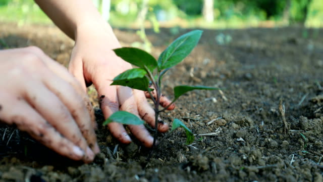 now, grow! - sustainable resources stock videos & royalty-free footage