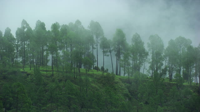 népal : mist in the forest - nepal stock-videos und b-roll-filmmaterial