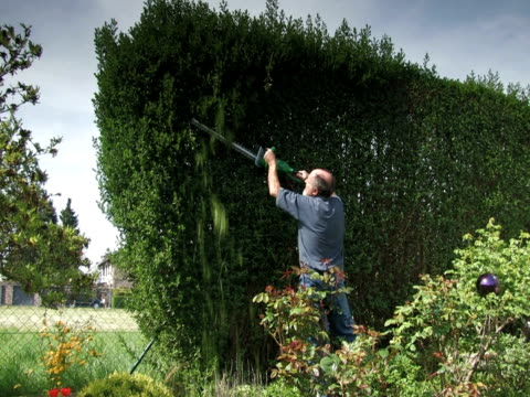 ntsc:cutting the hedge - pruning stock videos & royalty-free footage