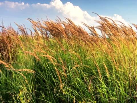 stockvideo's en b-roll-footage met ntsc:lush grass - plant attribute