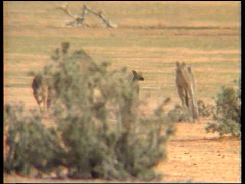 Radioactive waste DATE GVs Kangaroos