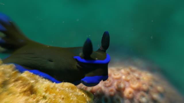 Nacktschnecke undersea