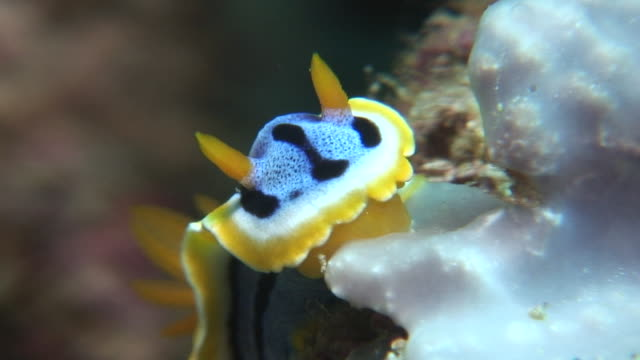 nudibranch - nudibranch stock videos and b-roll footage