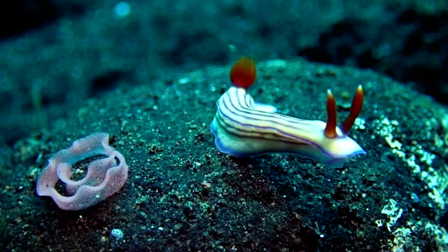 nudibranch with it's eeg - nudibranch stock videos & royalty-free footage