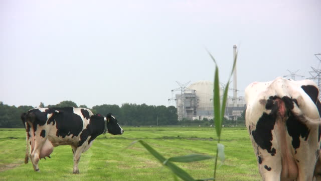 nulcear power station mit grasen cattles - atomkraftwerk stock-videos und b-roll-filmmaterial