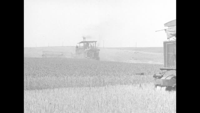 numerous views of a combine harvester cutting wheat the machine being towed many harnessed mules following a pair of white horses / note exact... - maultier stock-videos und b-roll-filmmaterial