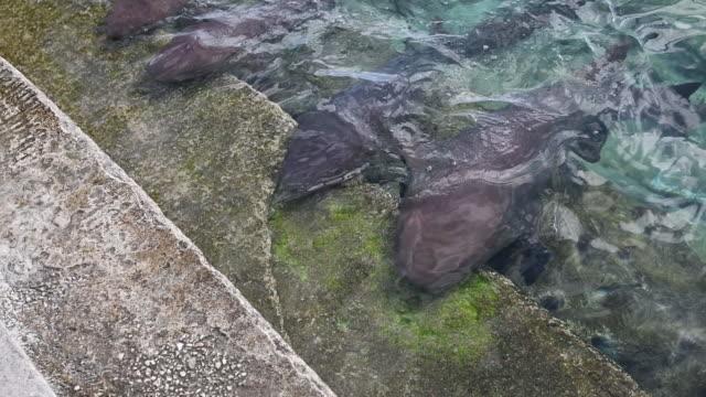 nurse sharks beautiful bahamas - seicht stock-videos und b-roll-filmmaterial
