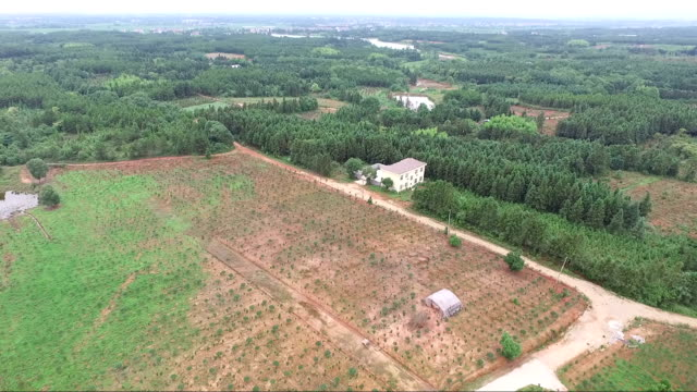 nursery-grown plant field view from air
