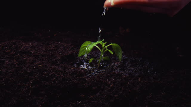 nurturing and caring - local produce stock videos & royalty-free footage