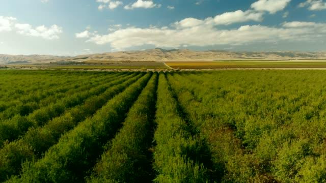 ナッツ農園 - ピスタチオナッツ点の映像素材/bロール