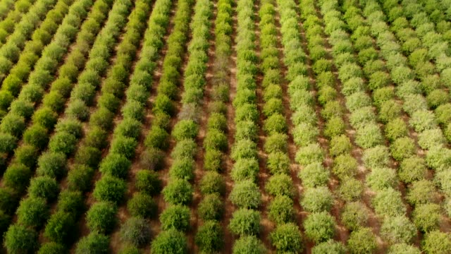 nut farm - pistachio nut stock videos & royalty-free footage
