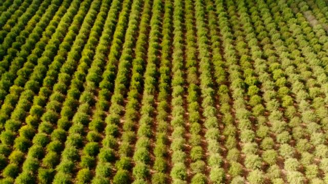 nut farm - almond stock videos & royalty-free footage