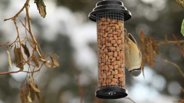 nuthatch on a bird table - peanut food stock videos and b-roll footage