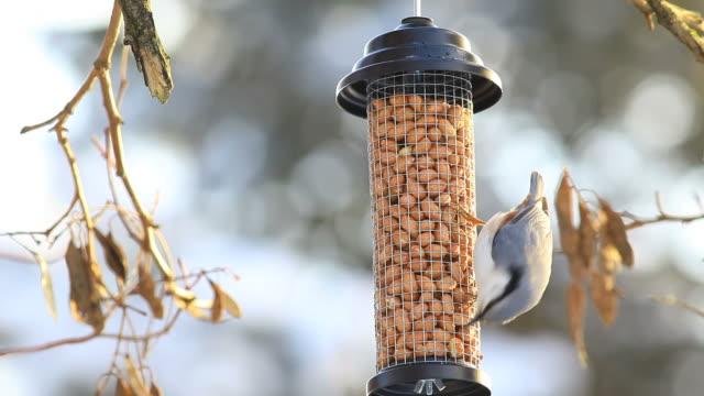vídeos y material grabado en eventos de stock de sita en una mesa de pájaro - baño para pájaros