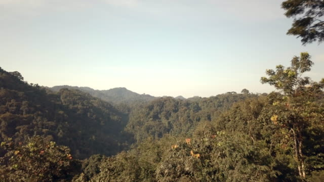 Nyungwe National Park at dawn
