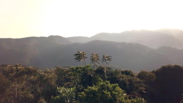 nyungwe national park at dawn - ルワンダ点の映像素材/bロール