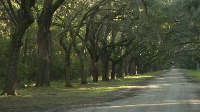 ws, pan, oak avenue in wormsloe historic site, savannah, georgia, usa - avenue stock videos & royalty-free footage