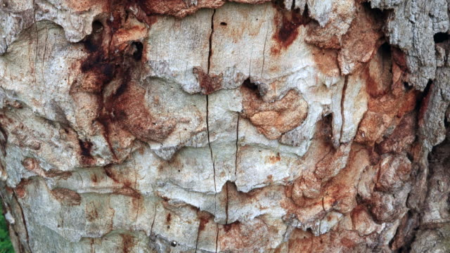 oak forest, springtime, montaña oriental costera, cantabria, spain, europe - plant bark stock videos and b-roll footage
