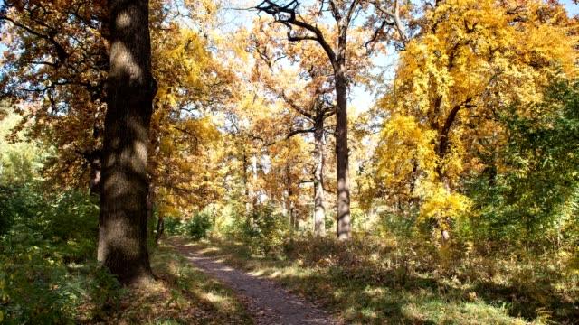 Eichenhain in der Herbstsaison. Zeitraffer.