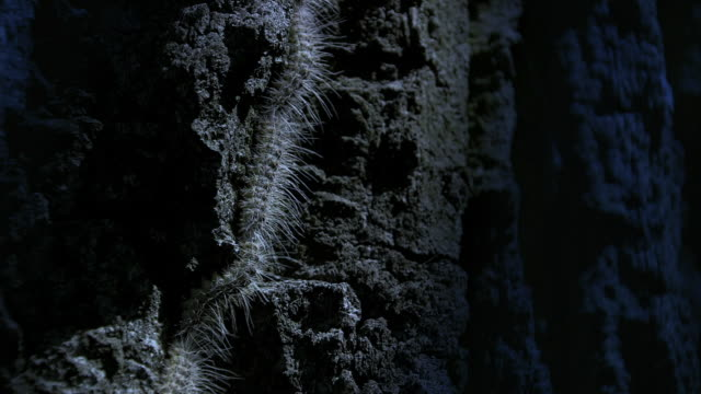 oak processionary moth at night - oak stock videos and b-roll footage