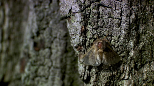 oak processionary moth - moth stock videos and b-roll footage