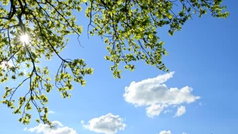 stockvideo's en b-roll-footage met oak tree leaves with sun, hesse, germany - boom
