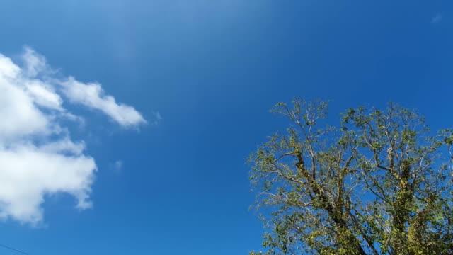 oak tree leaves with sunrise sky - pinaceae stock videos & royalty-free footage