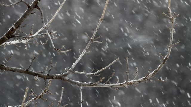 oak tree snowfall hd1080 - kansas stock videos & royalty-free footage