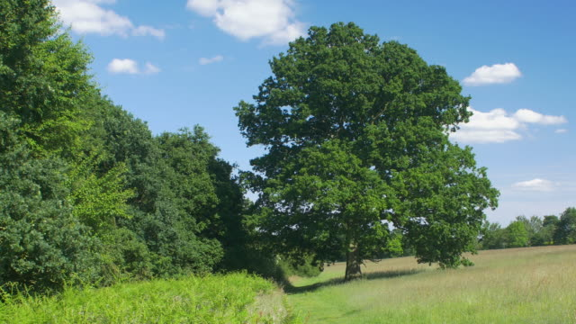 vídeos de stock e filmes b-roll de oak tree through the four seasons timelapse. - arvore