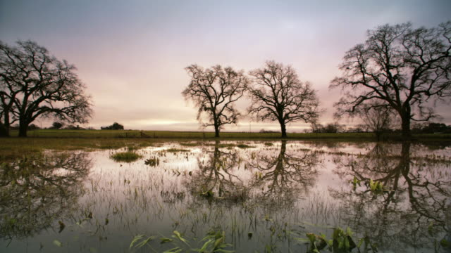 Oak Trees reflected in Pond