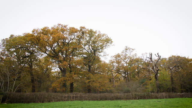 ws oak woodland and green field in autumn - branch stock videos & royalty-free footage