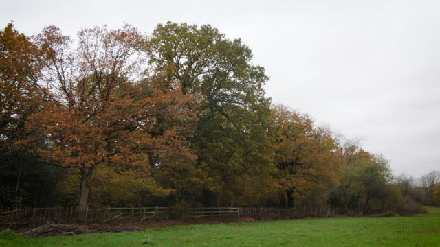 ws oak woodland and green field in autumn - 30 seconds or greater stock videos & royalty-free footage