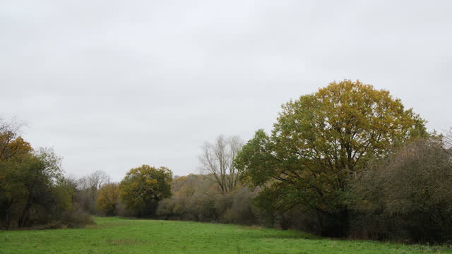 ws oak woodland and green field in autumn - bare tree stock videos & royalty-free footage
