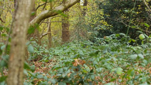 pf oak woodland in autumn - tree trunk stock videos & royalty-free footage