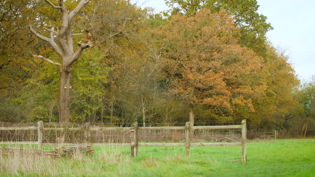 ws oak woodland in autumn - boundary stock videos & royalty-free footage