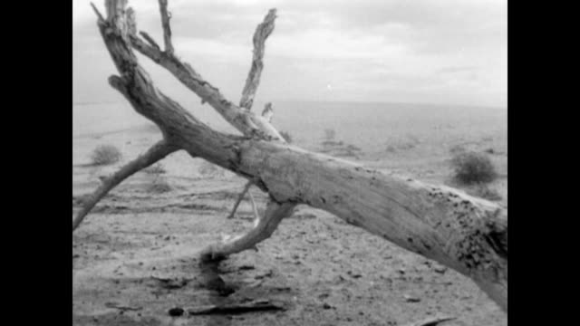 oakies driving west / desolate dust bowl landscape dust bowl migration and barren landscape on january 01 1937 - 1937 stock videos and b-roll footage
