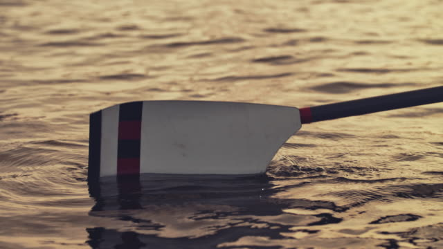 oar in river during sunset - pagaiare video stock e b–roll