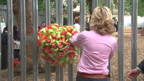 oasis farm re-opens at waterloo; anthea turner opening the farm sot gv flowers and vegetables in raised beds close shot marigold flower - anthea turner stock videos & royalty-free footage