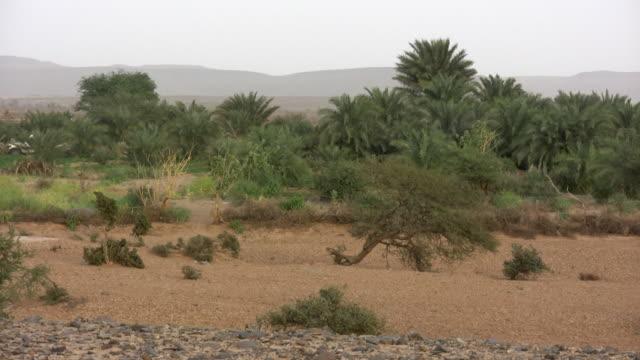 vídeos y material grabado en eventos de stock de ws oasis in desert / ouadane, adrar, mauritania - oasis desierto