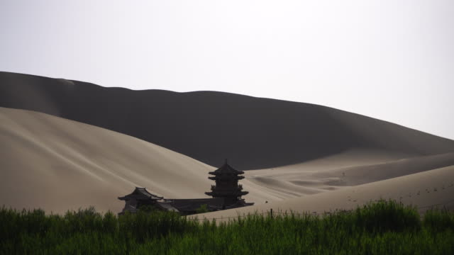 Oasis in sand dune