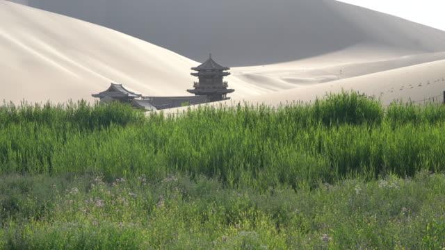 vídeos y material grabado en eventos de stock de oasis on desert - oasis desierto