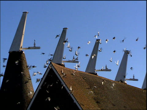 oast houses and hop yard at hop farm kent - 2001 stock videos and b-roll footage