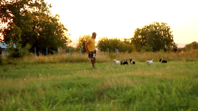 obedient dogs following their owner - three animals stock videos & royalty-free footage
