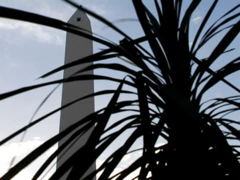 stockvideo's en b-roll-footage met ms, la, obelisk with palm tree in foreground, buenos aires, argentina - waaierpalm