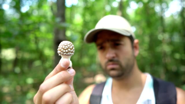 observing poisonous mushroom - picking mushrooms stock videos and b-roll footage