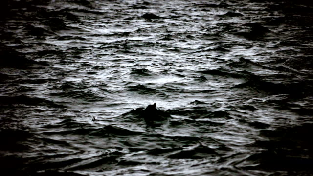 ocean before storm. water surface. perfect background. - murder stock videos & royalty-free footage
