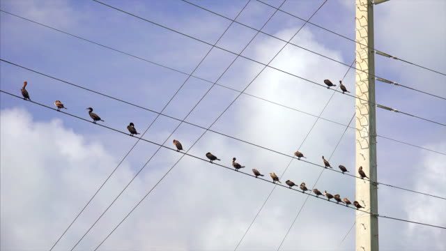 ocean birds sitting along electric power lines in  the florida keys - perching stock videos & royalty-free footage