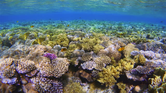 Ocean life on Coral reef with lot of tropical Fish / Red Sea