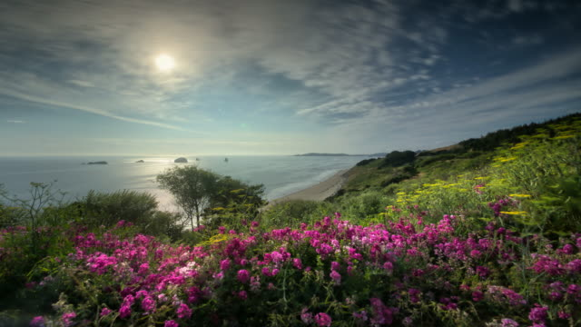 ocean scenic with wildflowers and clouds - wildflower stock videos & royalty-free footage